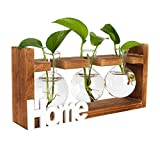 PAG Plant Terrariums Kit Tabletop Hydroponics Air Planter Holder with 3 Bulb Glass Vase and Solid...