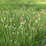 Outsidepride Short Native Grass Seed Mix of Blue Grama, Buffalo, and Sideoats Grama - 1 LB