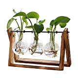 Plant Terrarium with Wooden Stand, Air Planter Bulb Glass Vase Metal Swivel Holder Retro Tabletop...