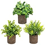 THE BLOOM TIMES Set of 3 Small Potted Artificial Plants Plastic Fake Greenery Boxwood Rosemary Mini...