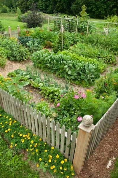 Vegetable Garden Flowers, Plants & Planters