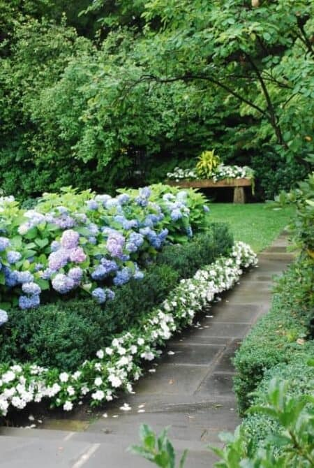 Blue Hydrangeas, Boxwood, and White Impatiens 6 - Flowers & Plants - 1001 Gardens