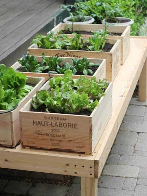 Herbs Garden in Wine Boxes Flowers, Plants & Planters