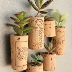 Cork Mini Garden - flowers-plants-planters