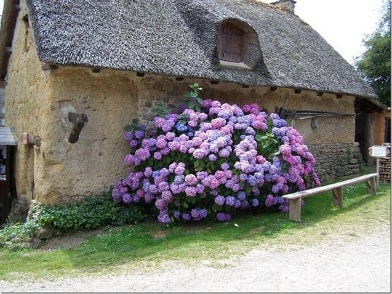 Giant Bouquet - flowers-plants-planters