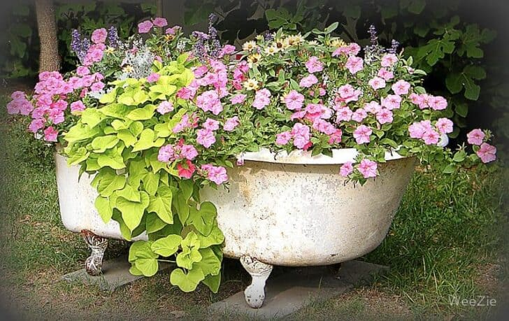 Flower Garden in a Bathtub Garden Decor