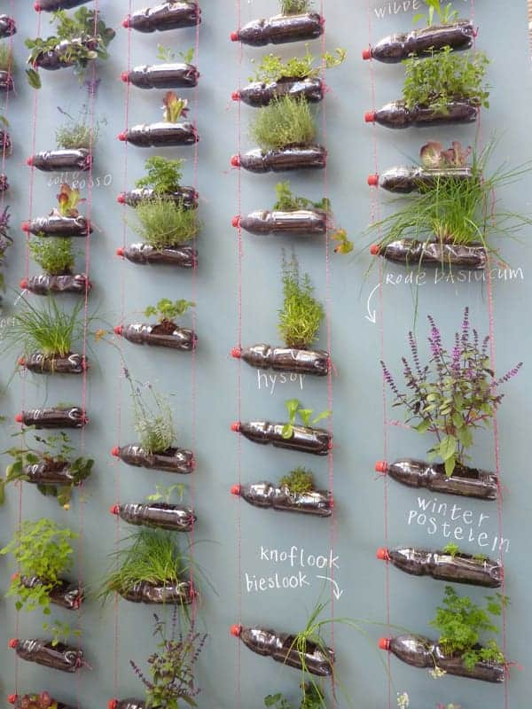 Suspended Bottles Herb Garden Flowers, Plants & Planters
