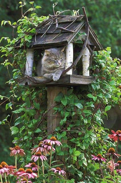Cat Waiting for Birds - feeders-birdhouses