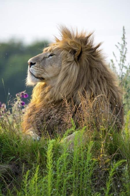 Lions Love Gardens 10 - Landscape & Backyard Ideas