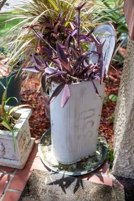 Mail Box in the Garden 1 - Flowers & Plants