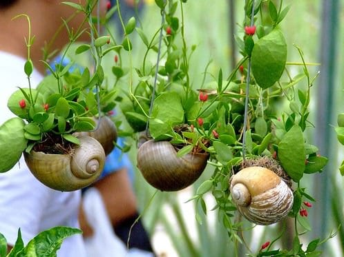 Snail Shell Mini Garden - flowers-plants-planters