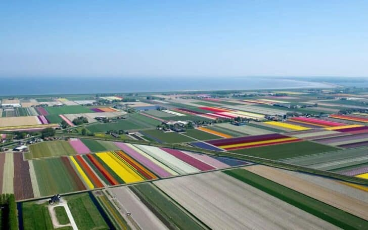 Aerial Photographs of Tulip Fields in the Netherlands, by Normann Szkop - flowers-plants-planters
