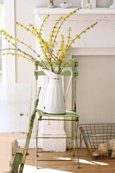 Forsythia Blooming and Decoration Ideas - flowers-plants-planters