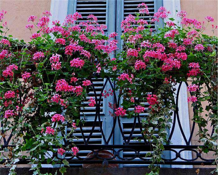 Balcony garden 1001 gardens for Beautiful flowers to plant in your garden