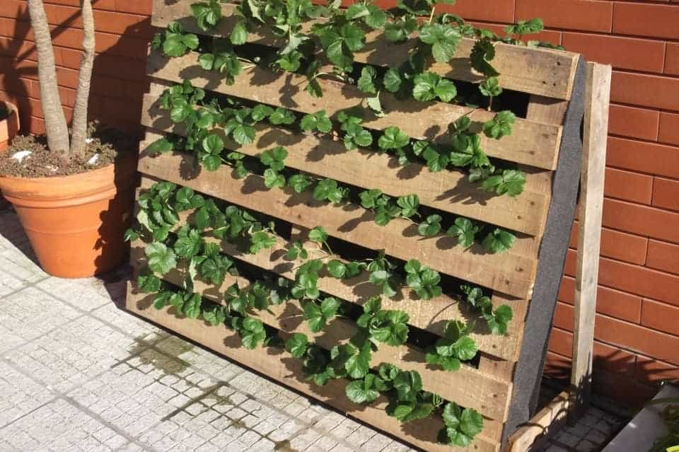 pallet used as strawberries garden 1001 gardens