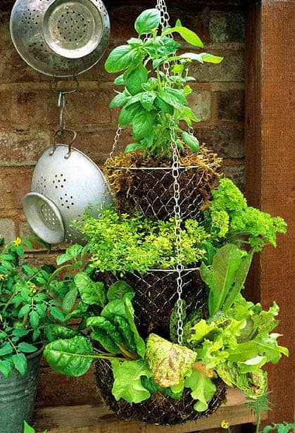 A Hanging Basket Can Harbour a Productive Herb Garden - flowers-plants-planters