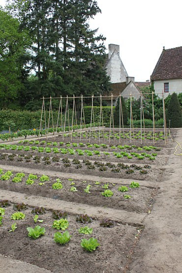 Chenonceau Castle Vegetable Garden Flowers, Plants & Planters