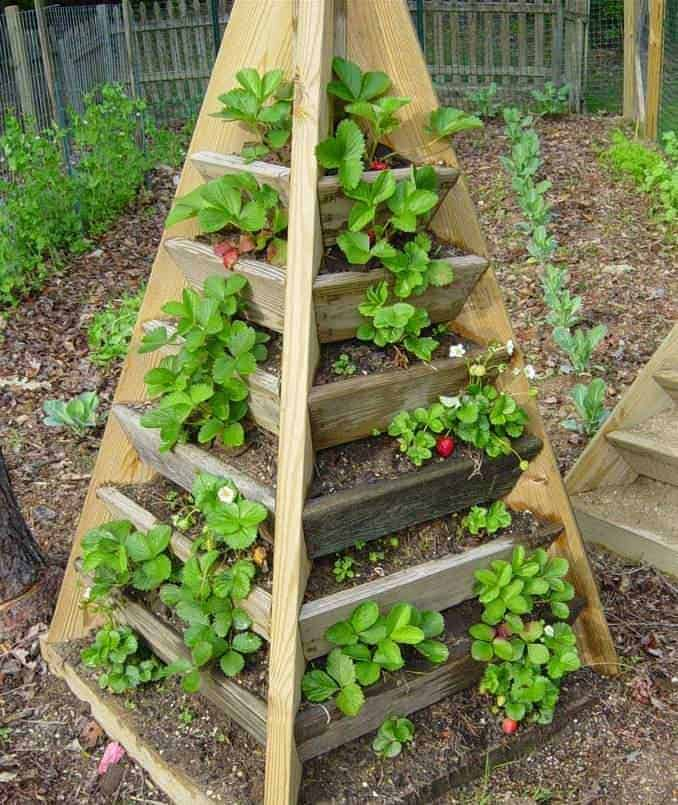 Pyramid of Strawberries Flowers, Plants & Planters