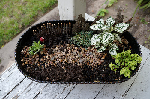 Miniature Garden Flowers, Plants & Planters