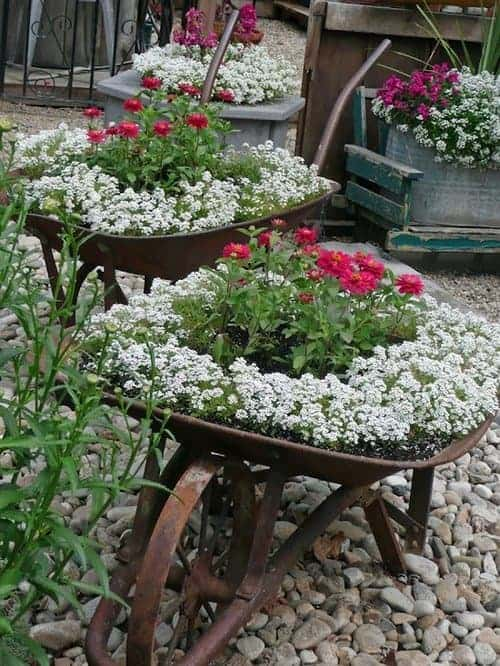 Wheelbarrow Planting - flowers-plants-planters