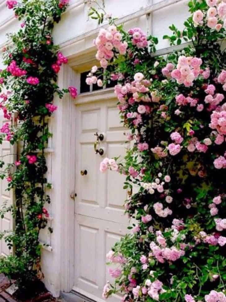 Climbing Roses 1 - Flowers & Plants