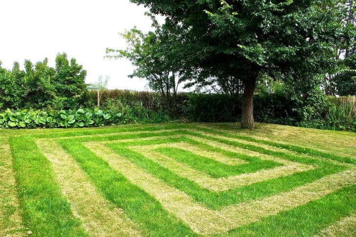 Making Fun of Cutting Lawn - landscaping