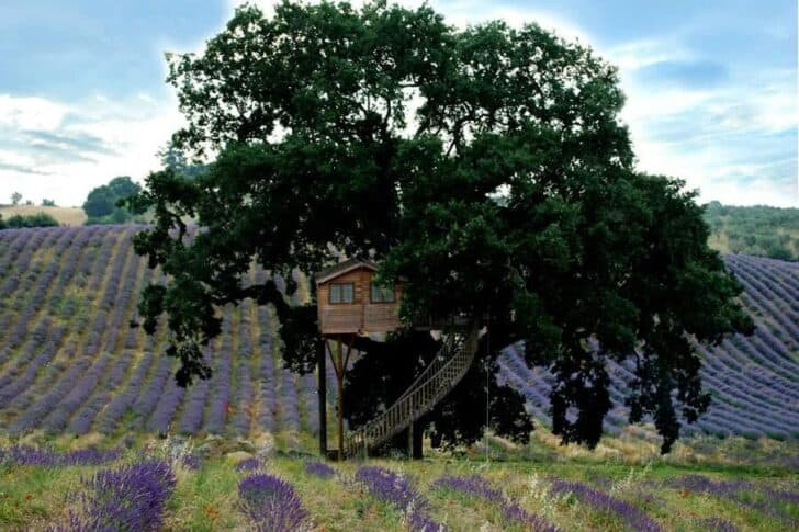 La Piantata : Treehouse on Lavender Fields - sheds-huts-treehouses