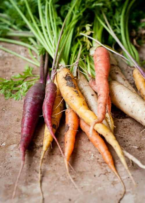 Carrots Are Orange for Political Reasons ! Flowers, Plants & Planters