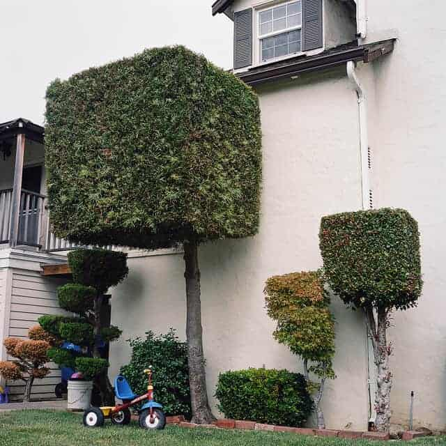 The Mean Streets of Alameda - flowers-plants-planters