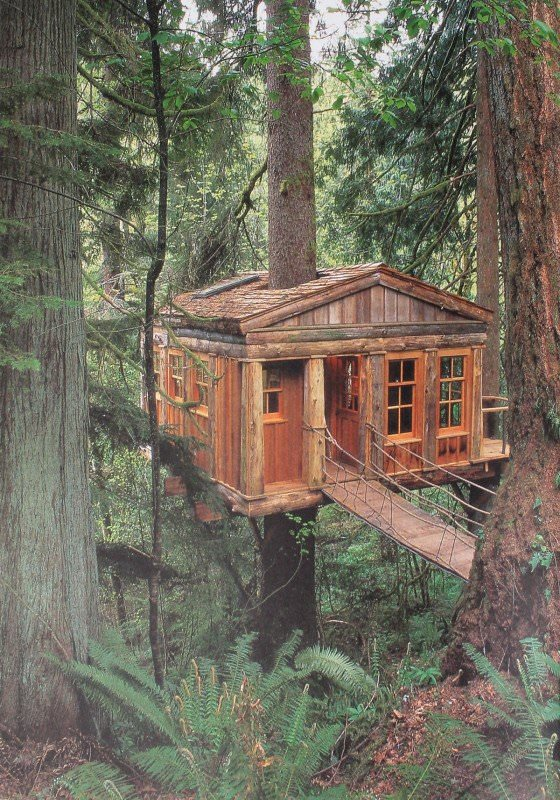 Old Treehouse - sheds-huts-treehouses