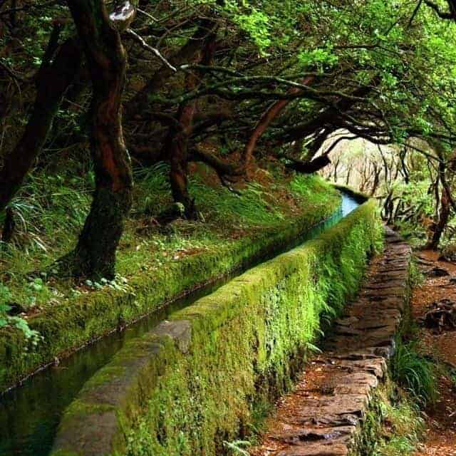 The Levadas Landscape in Madeira - landscaping