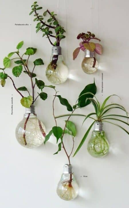 Grow Your Own Lightbulbs Garden 1 - Urban Gardens & Agriculture - 1001 Gardens