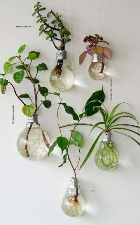 lightbulb indoor gardening