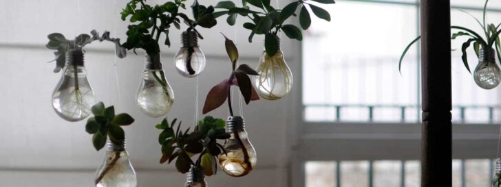 Grow Your Own Lightbulbs Garden - guerrilla-gardening