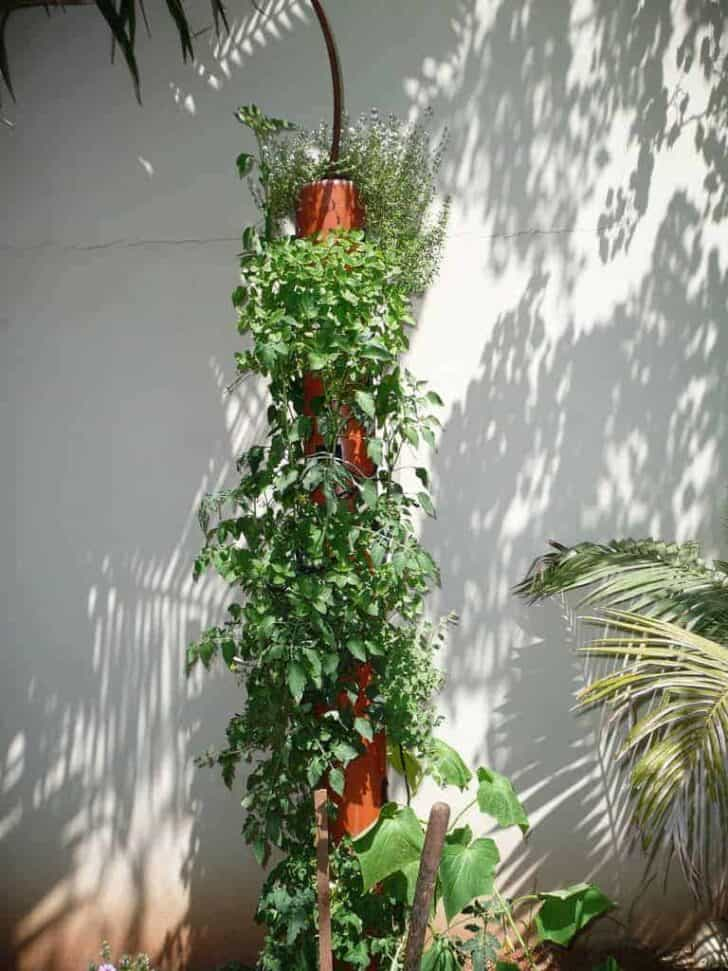 Diy : Vertical Garden Flowers, Plants & Planters