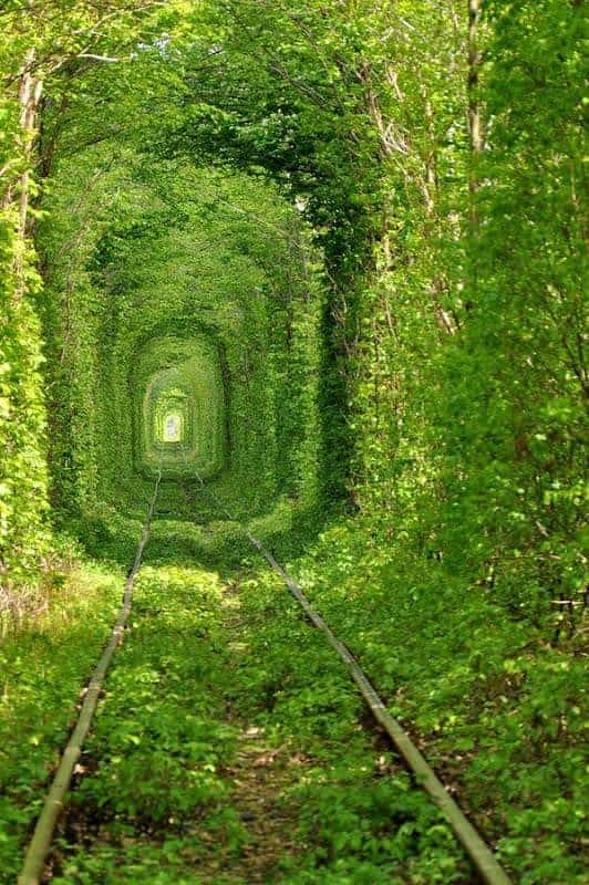 Tunnel of Love Landscape in Kleven, Ukraine Landscapes