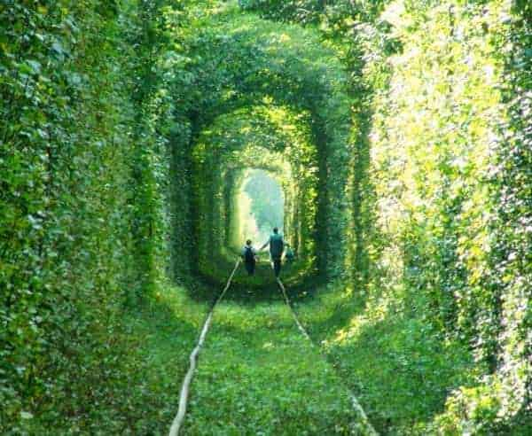 Tunnel of Love Landscape in Kleven, Ukraine - landscaping