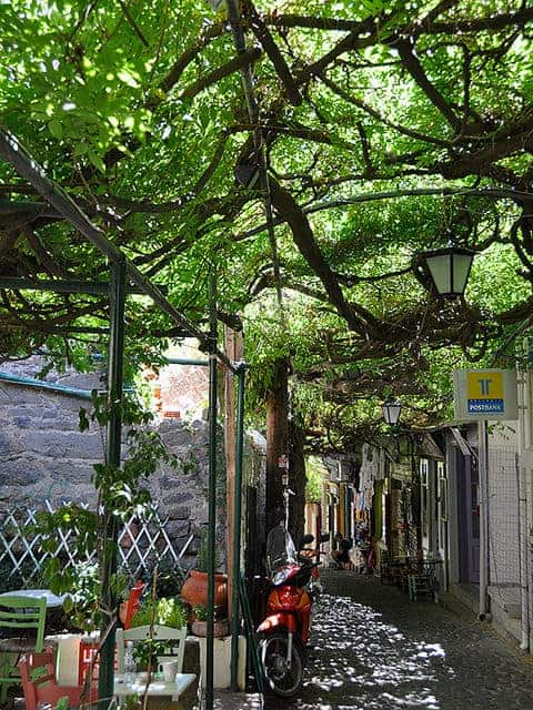 Wisteria Covered Street, Molyvos Greece - flowers-plants-planters