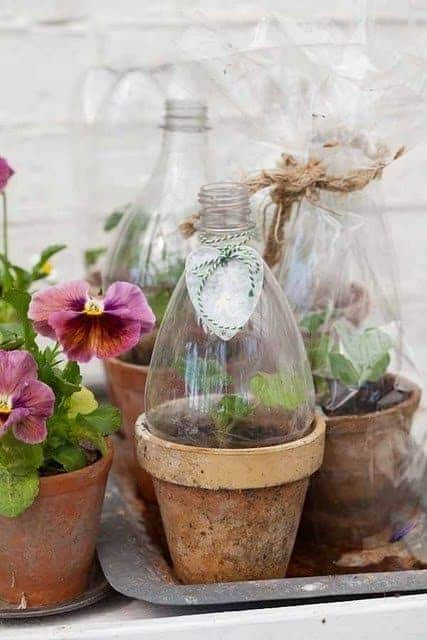 Diy : Mini Greenhouses from Plastic Bottles - flowers-plants-planters
