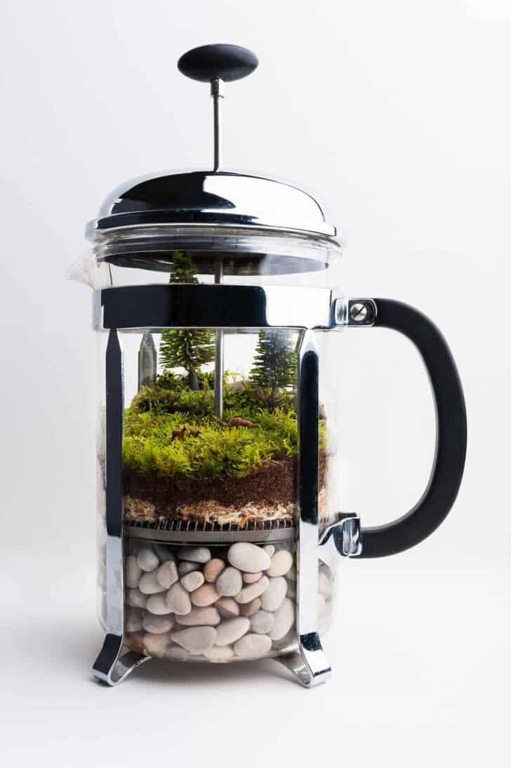 French Press Repurposed as a Terrarium 1 - Flowers & Plants - 1001 Gardens