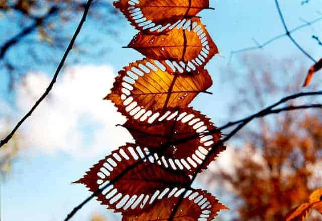 Walter Mason's Land Art - garden-decor