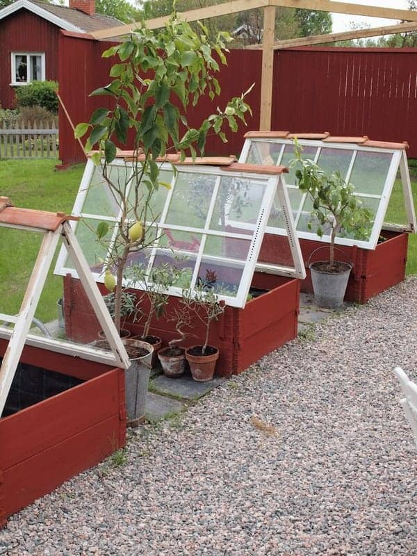 Greenhouses from Repurposed Windows - flowers-plants-planters