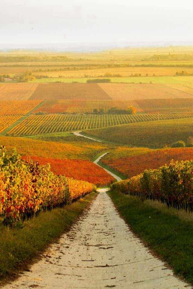 Autumn Vineyard Landscape in Hungary 1 - Landscape & Backyard Ideas - 1001 Gardens