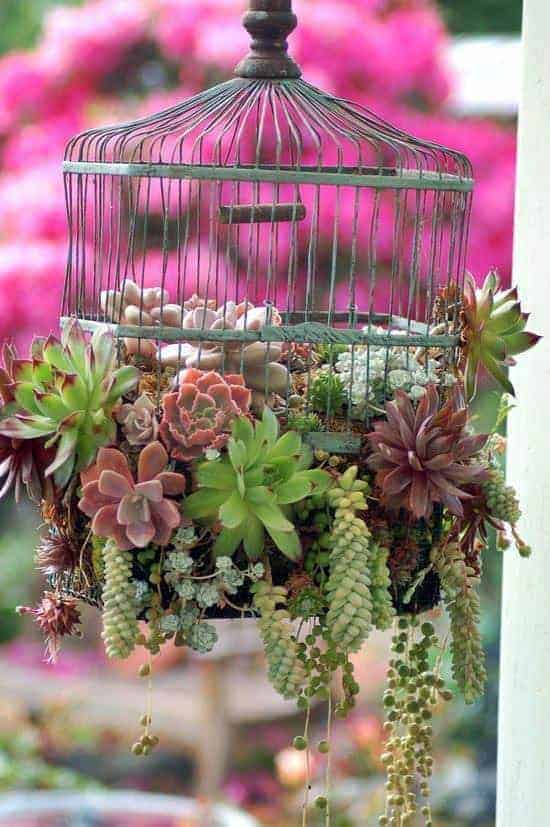 Upcycled Birdcage into Succulent Planter 1 - Flowers & Plants - 1001 Gardens