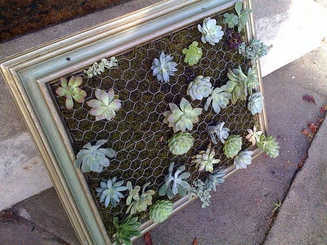 Diy: Framed Vertical Succulent Garden 5 - Flowers & Plants