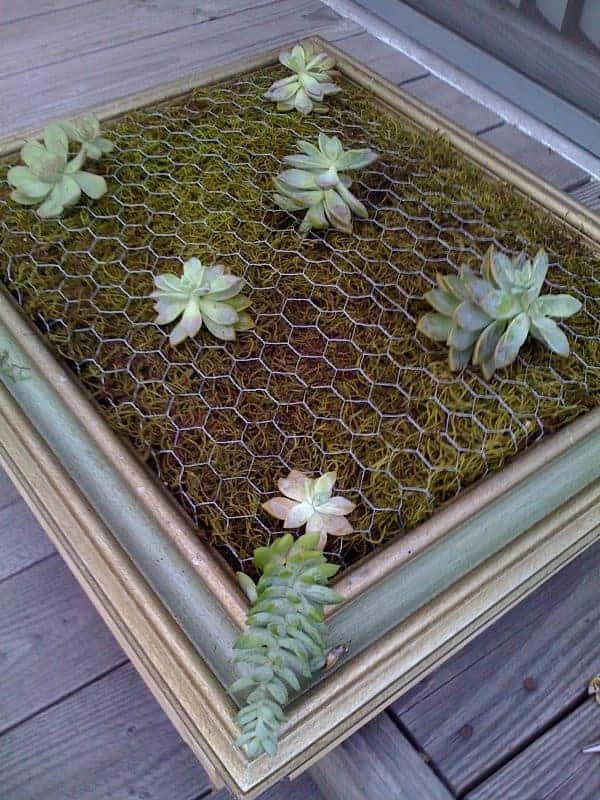 Diy: Framed Vertical Succulent Garden 7 - Flowers & Plants