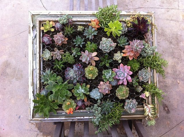 Diy: Framed Vertical Succulent Garden 3 - Flowers & Plants