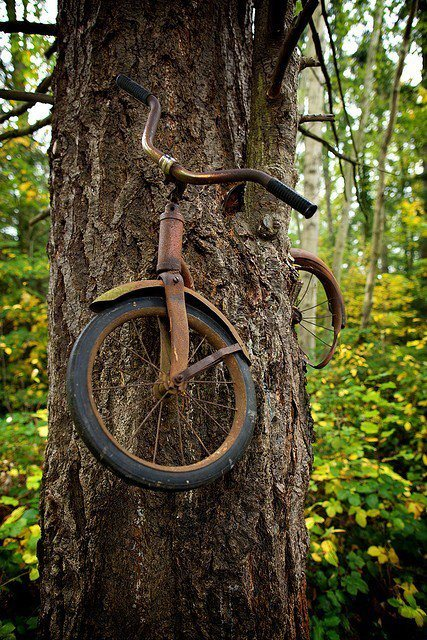 1950's Bike Eaten by a Tree - guerrilla-gardening