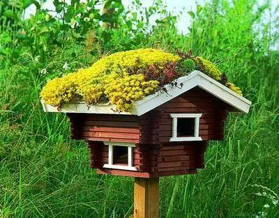 Green Roof Birdhouse - feeders-birdhouses