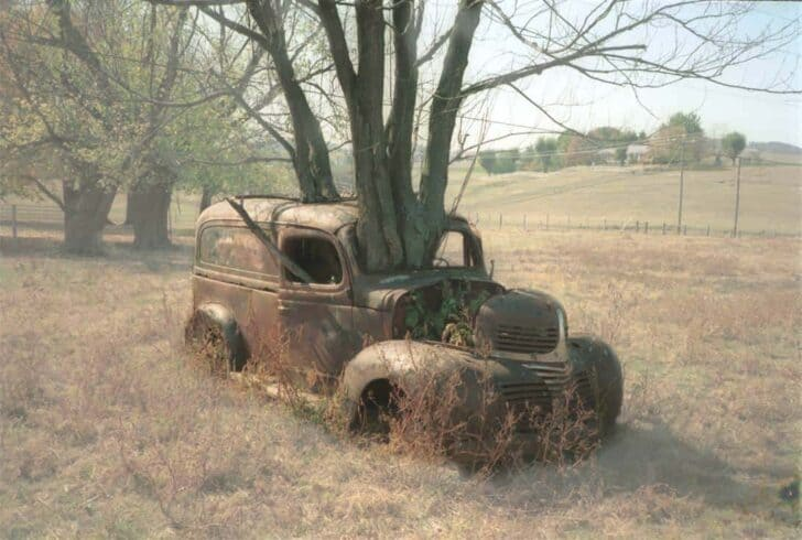 Tree Growing through an Old Dodge Truck - guerrilla-gardening